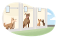 Four dogs boarding at a dog hotel.